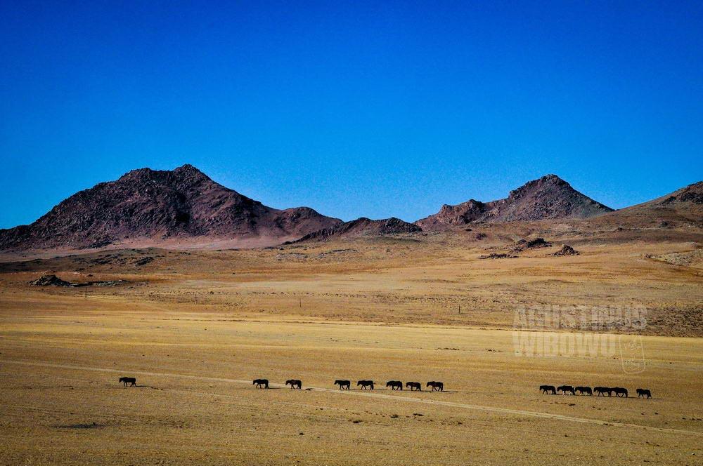 mongolia-2009-khovd-steppe-mountain-horses