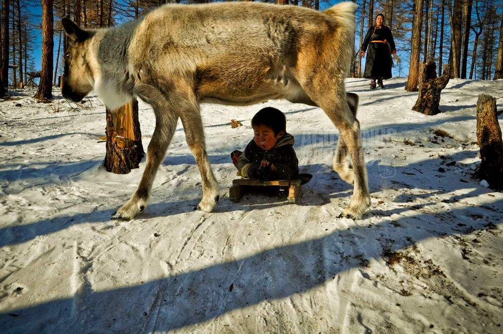 mongolia-2009-taiga-dukha-boy-reindeer-snow