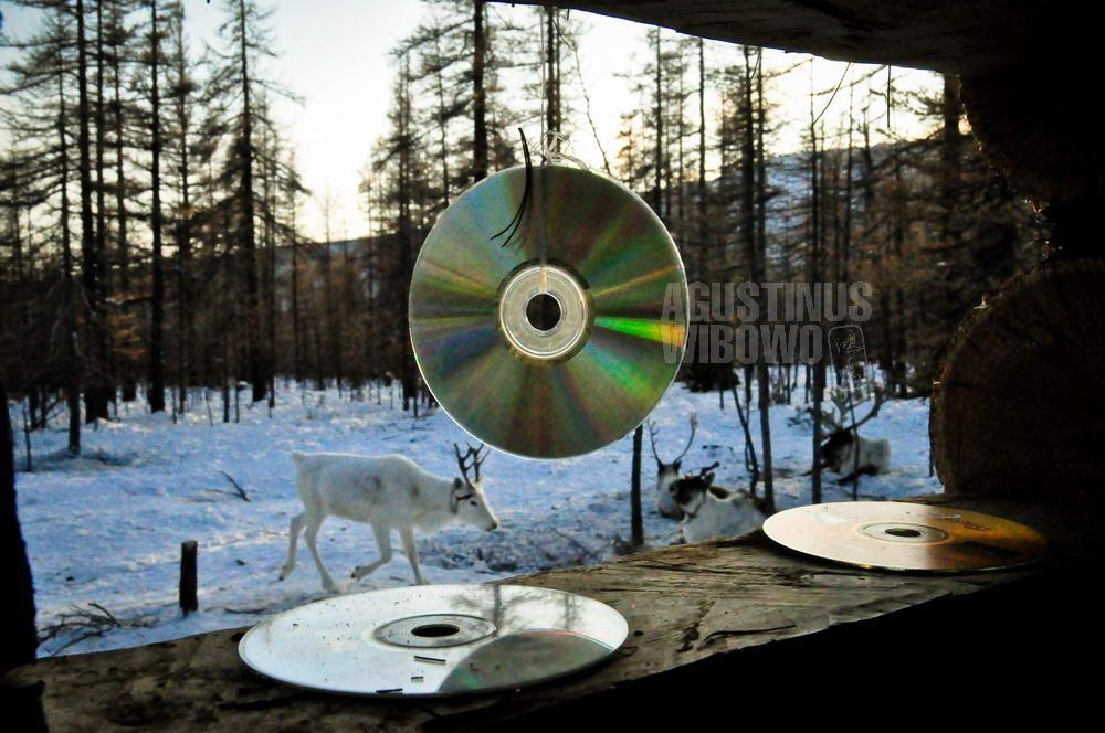 mongolia-2009-taiga-reindeer-cd