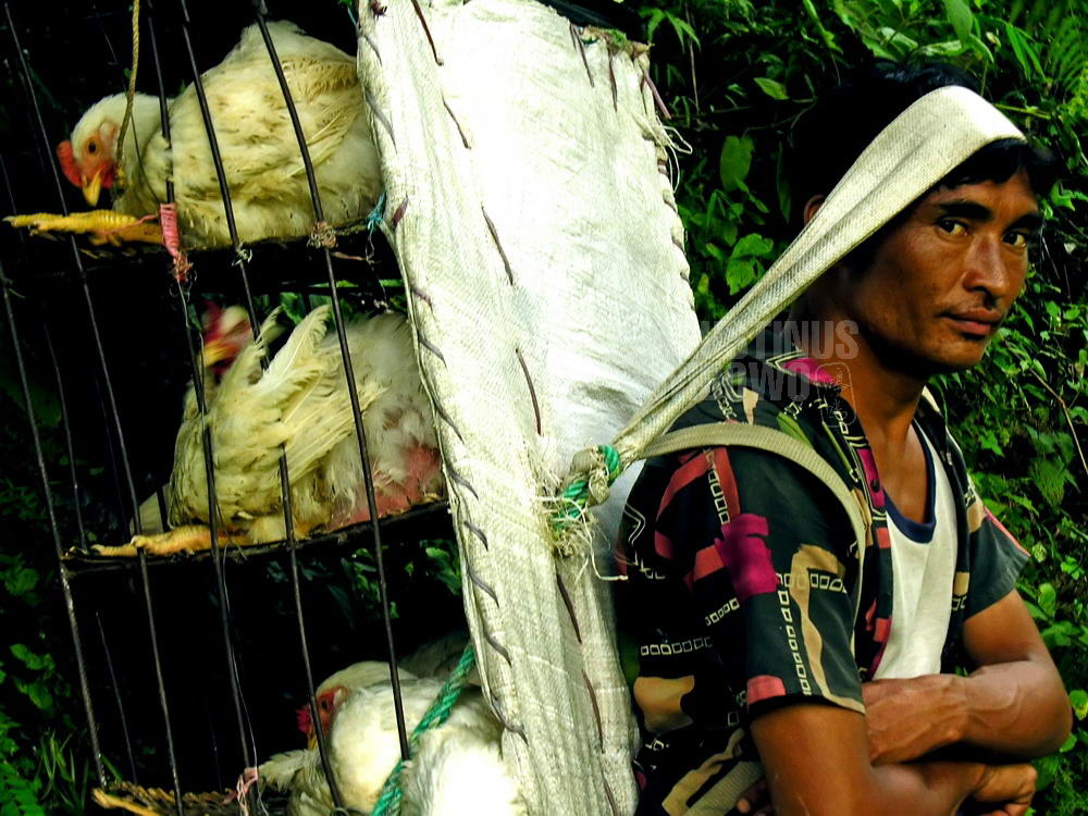 nepal-2005-annapurna-circuit-trekking-porter-chicken