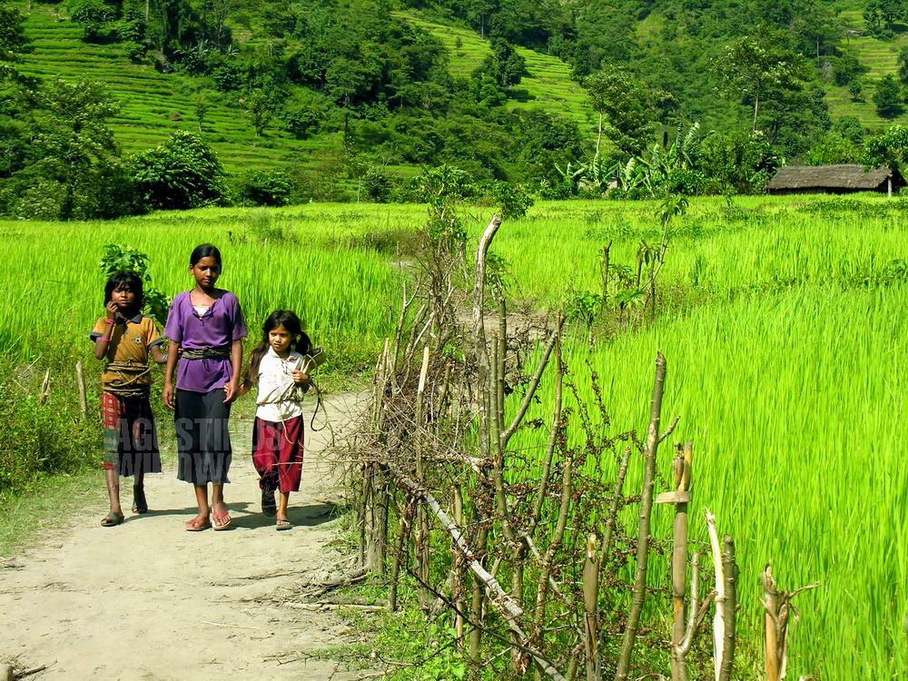 nepal-2005-annapurna-circuit-trekking-rice-paddy