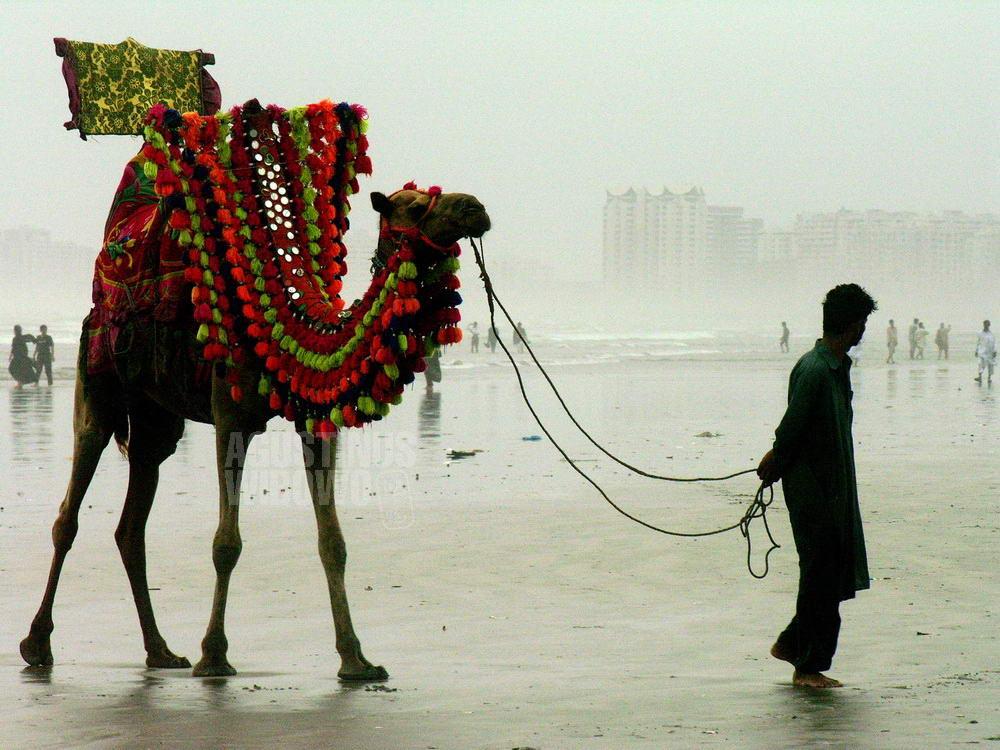 pakistan-2006-karachi-beach-camel-man