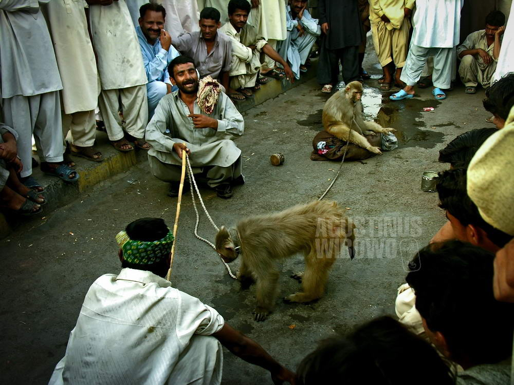 pakistan-2006-lahore-street-men-monkeys