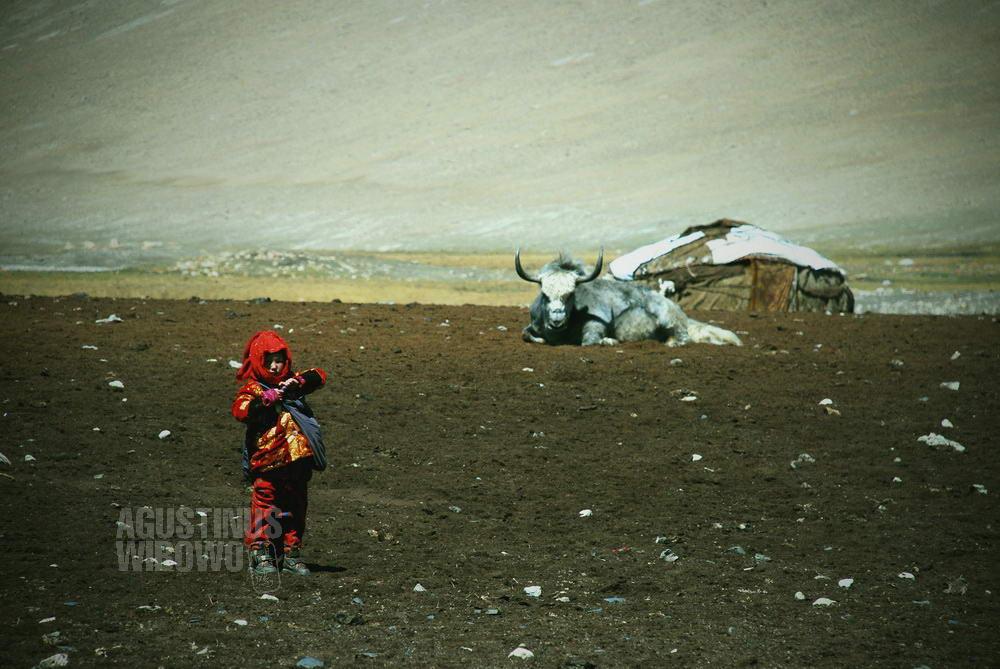 afghanistan-2008-pamir-girl-yak